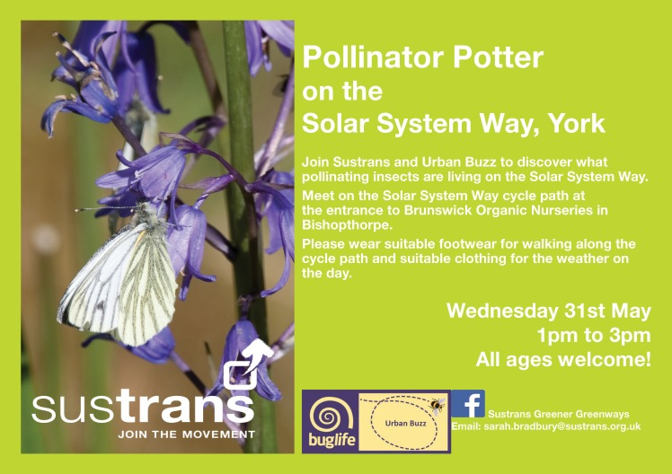 pollinator potter 31 may york.jpg